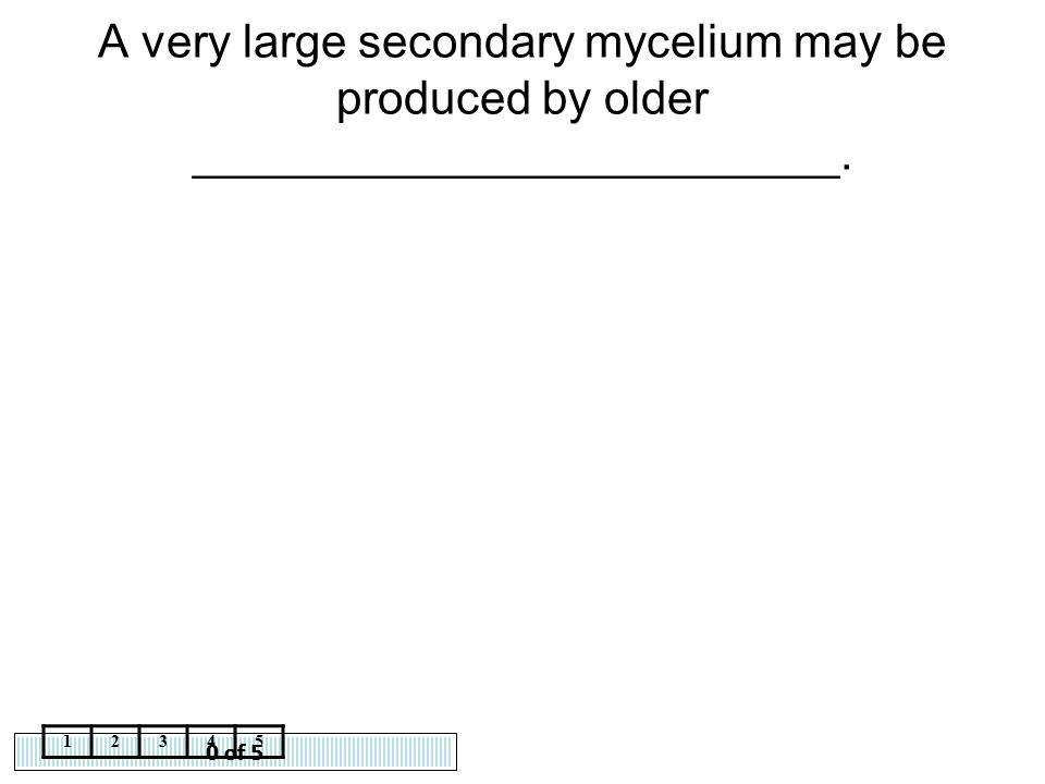 A very large secondary mycelium may be produced by older _________________________.