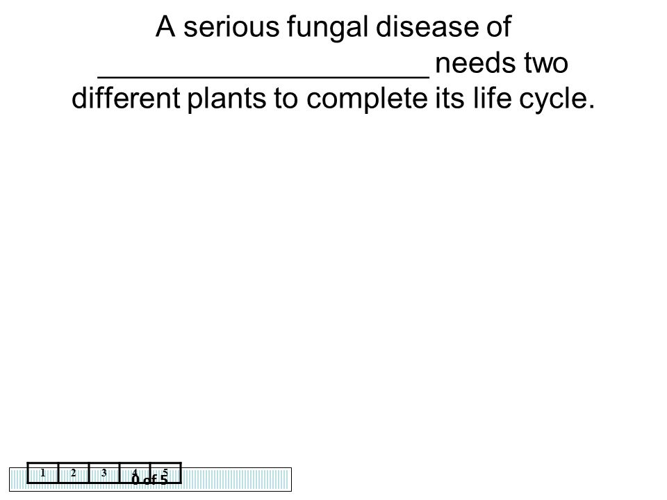 A serious fungal disease of ____________________ needs two different plants to complete its life cycle.