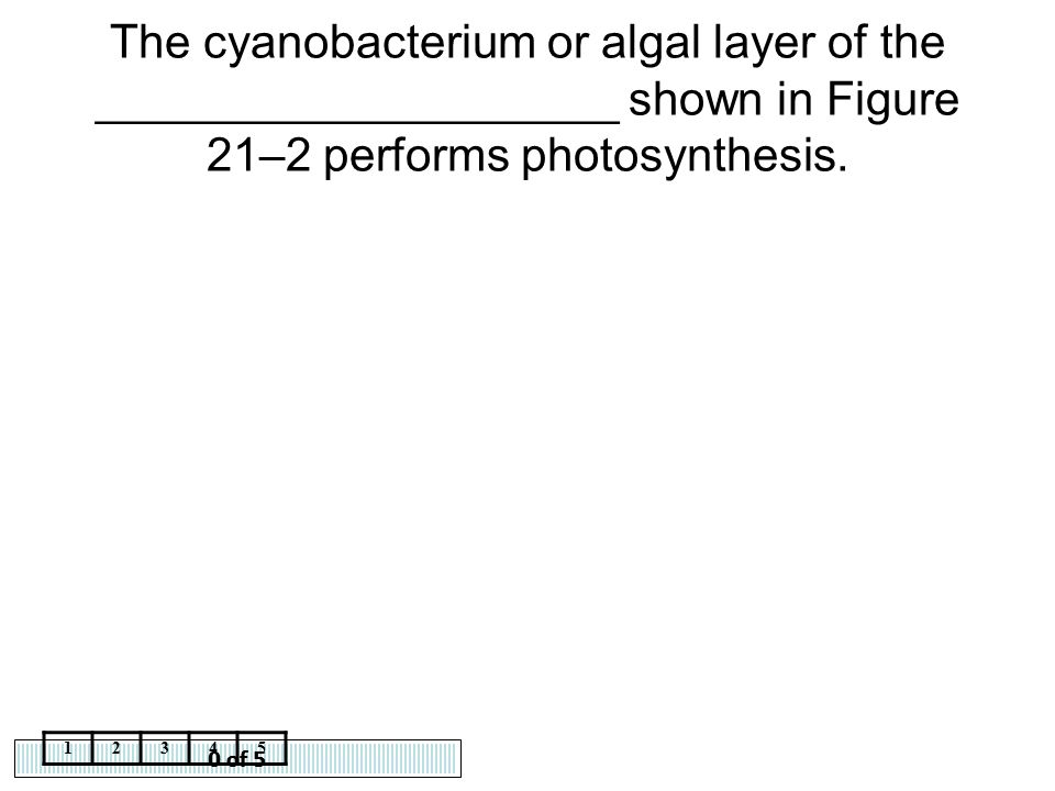 The cyanobacterium or algal layer of the ____________________ shown in Figure 21–2 performs photosynthesis.