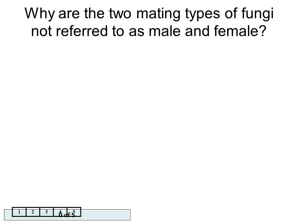 Why are the two mating types of fungi not referred to as male and female