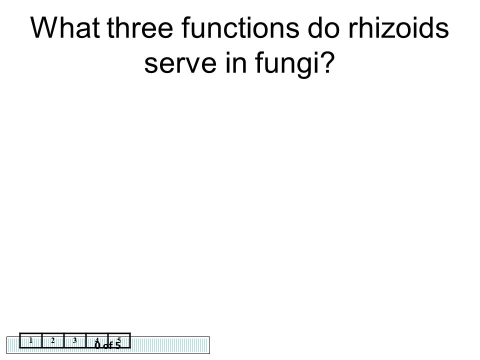 What three functions do rhizoids serve in fungi