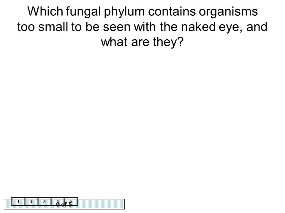 Which fungal phylum contains organisms too small to be seen with the naked eye, and what are they