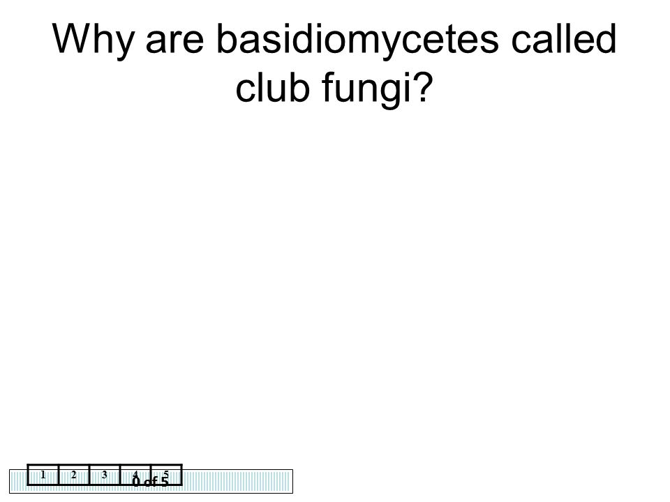 Why are basidiomycetes called club fungi