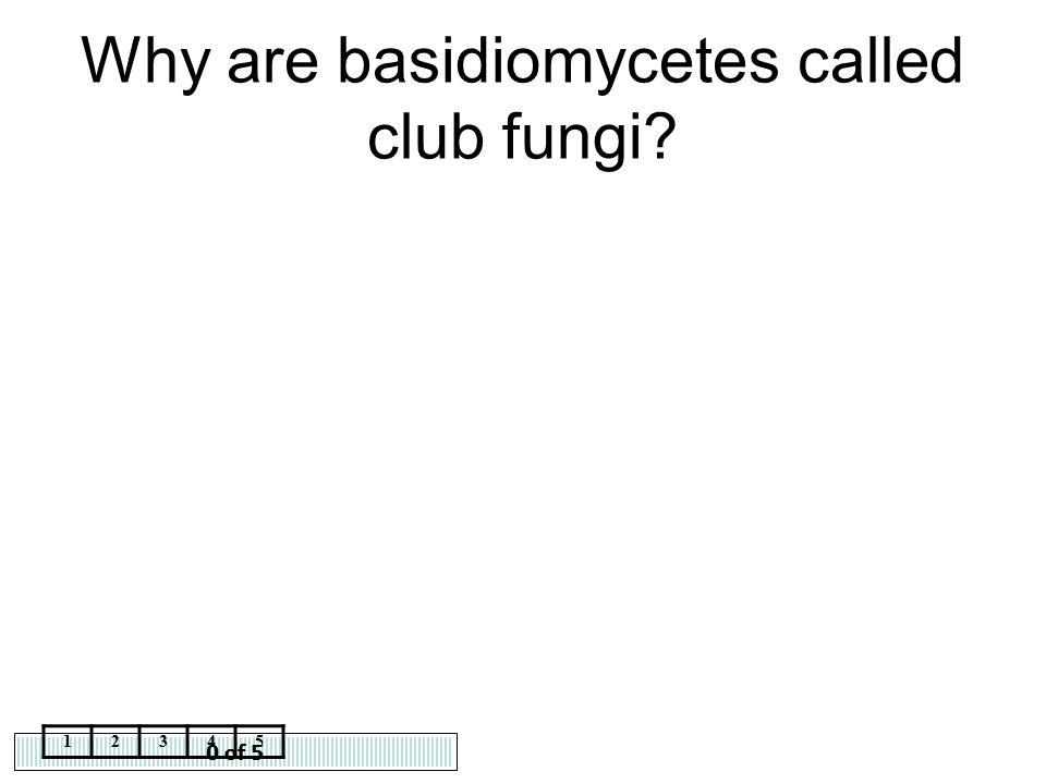 Why are basidiomycetes called club fungi
