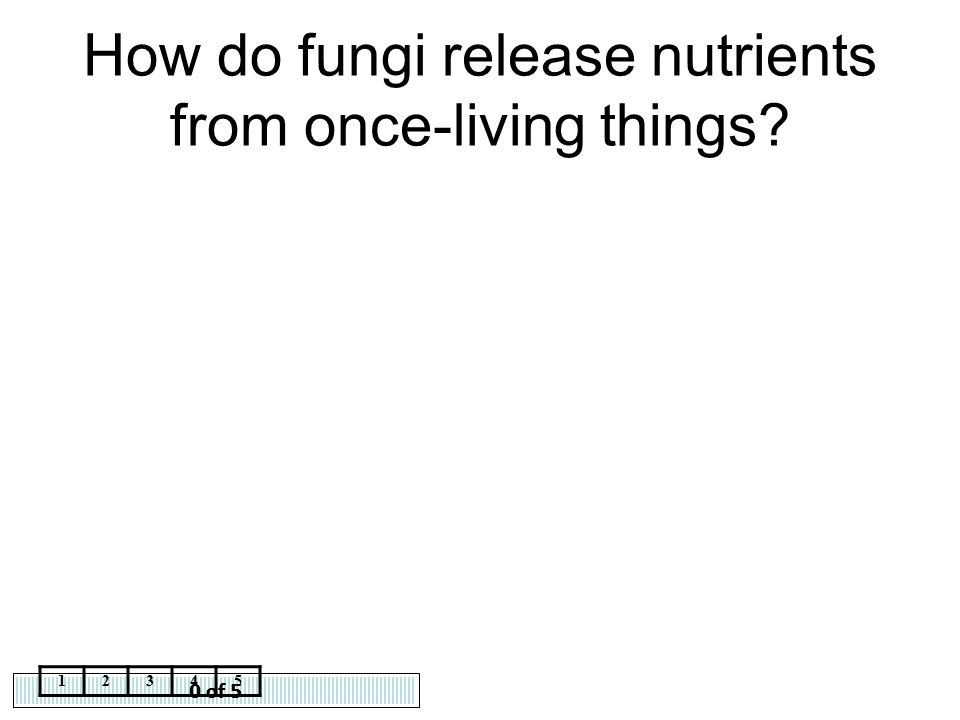 How do fungi release nutrients from once-living things