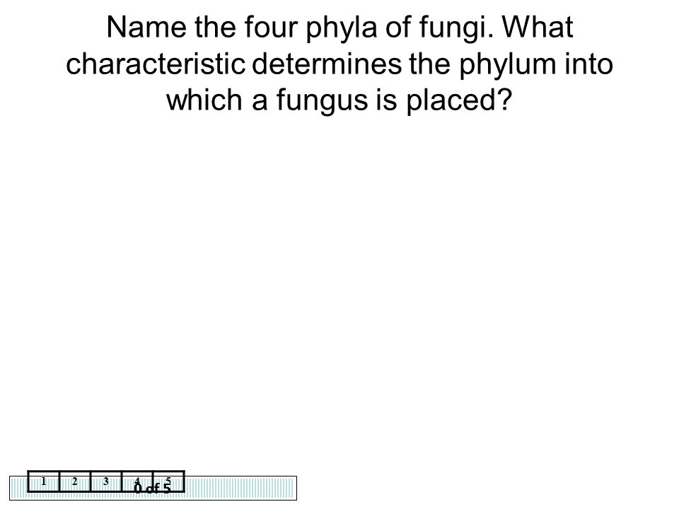 Name the four phyla of fungi