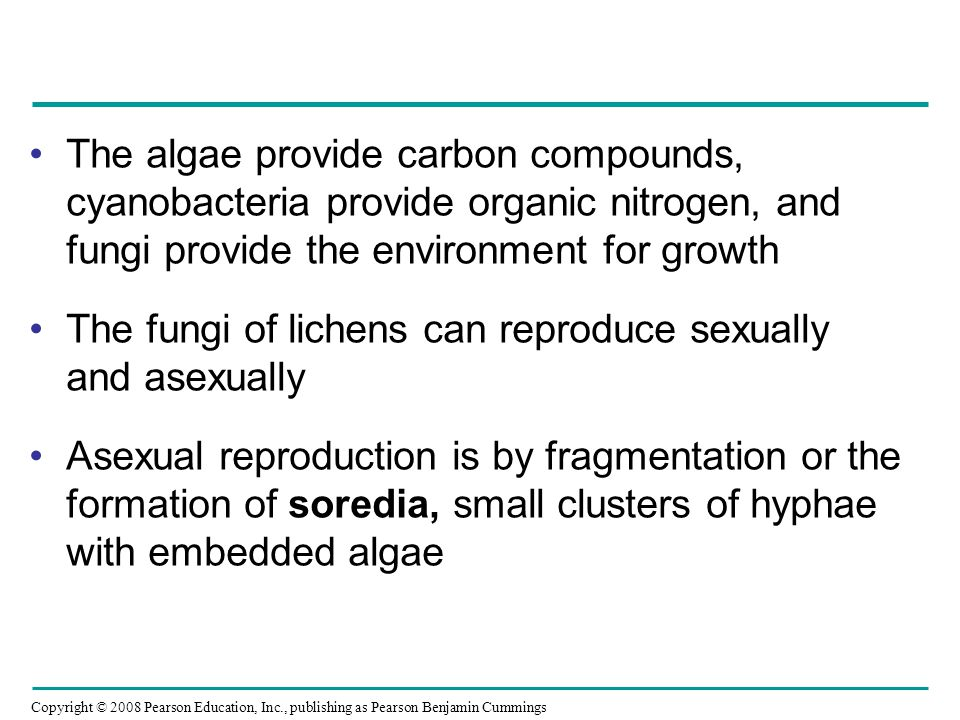The algae provide carbon compounds, cyanobacteria provide organic nitrogen, and fungi provide the environment for growth