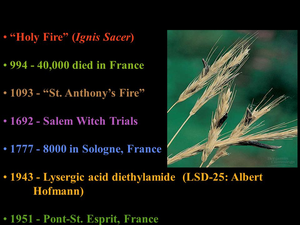 Holy Fire (Ignis Sacer)
