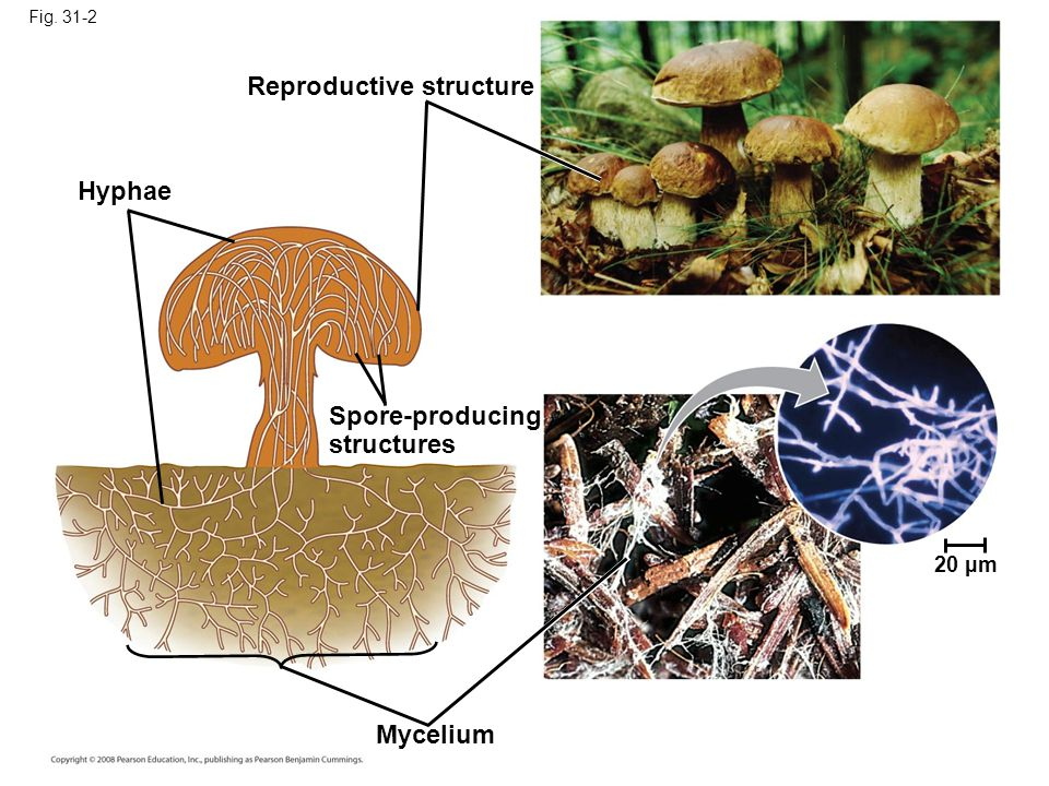 Reproductive structure