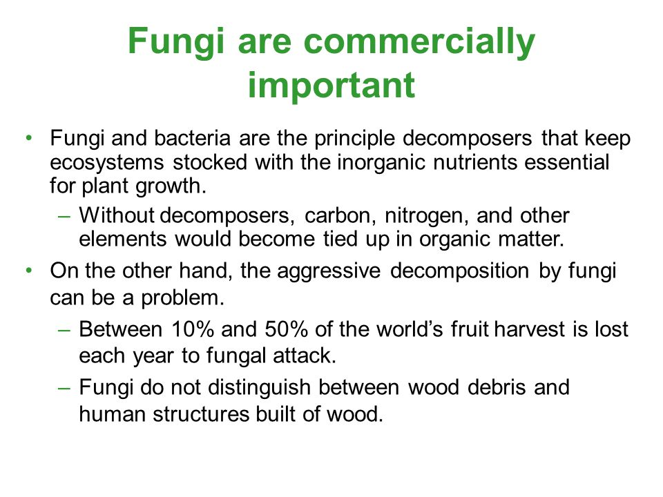 Fungi are commercially important