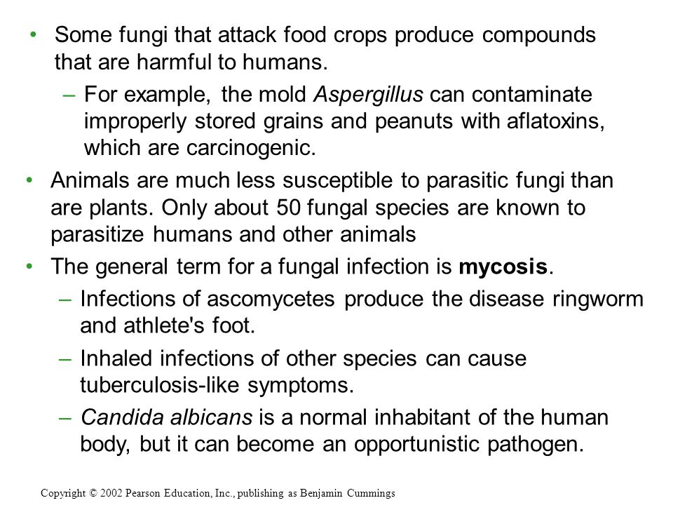 The general term for a fungal infection is mycosis.