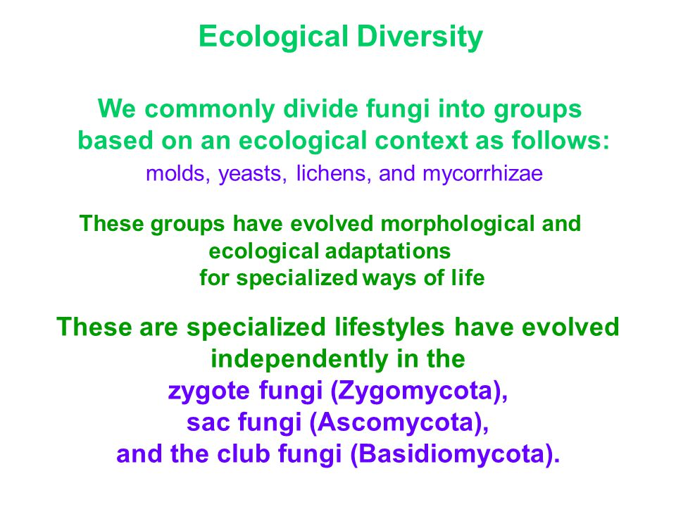 Ecological Diversity We commonly divide fungi into groups