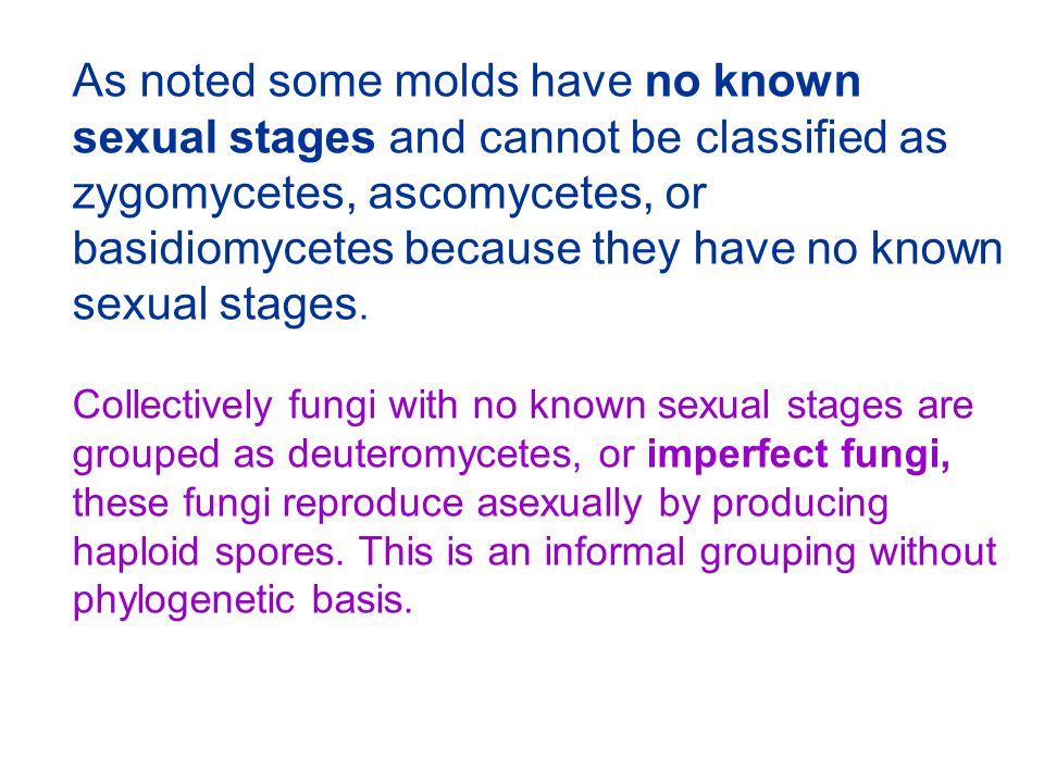 As noted some molds have no known sexual stages and cannot be classified as zygomycetes, ascomycetes, or basidiomycetes because they have no known sexual stages.