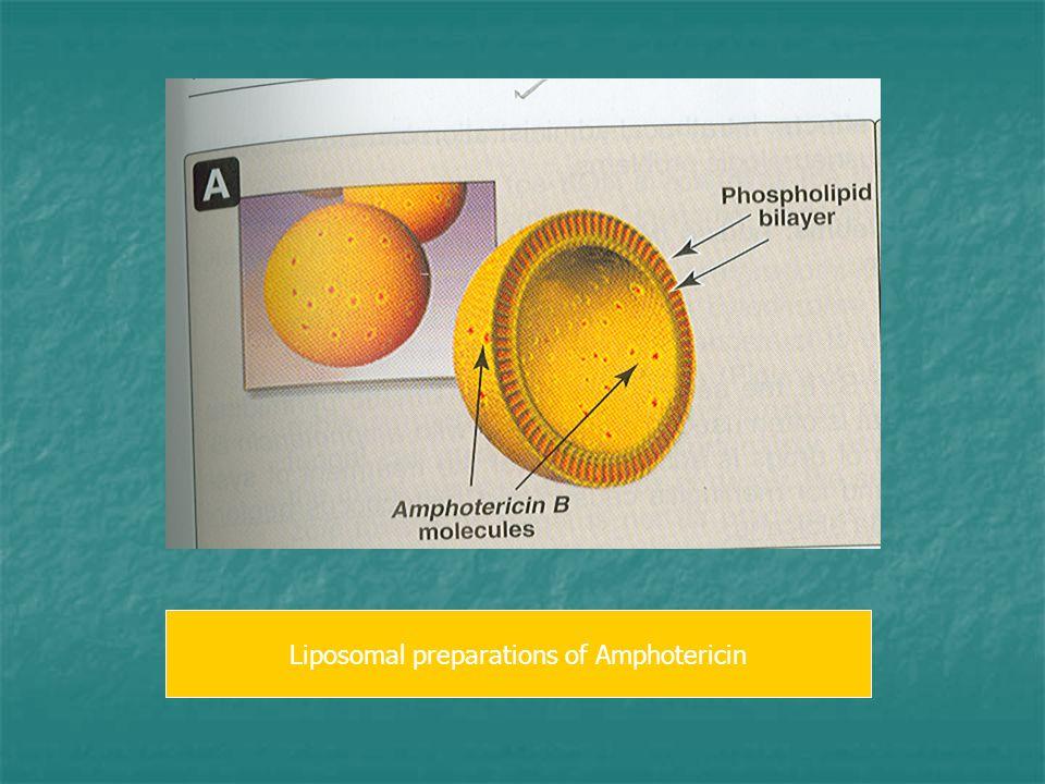 Liposomal preparations of Amphotericin
