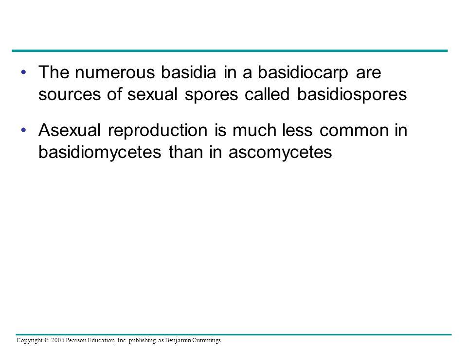 The numerous basidia in a basidiocarp are sources of sexual spores called basidiospores