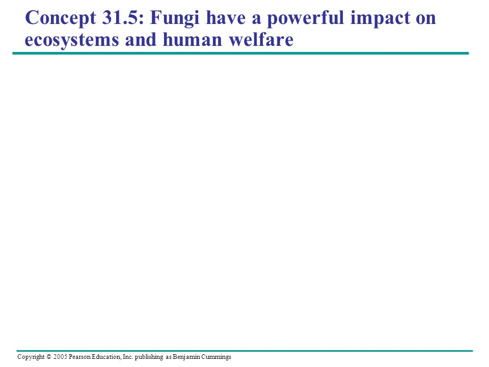 Concept 31.5: Fungi have a powerful impact on ecosystems and human welfare