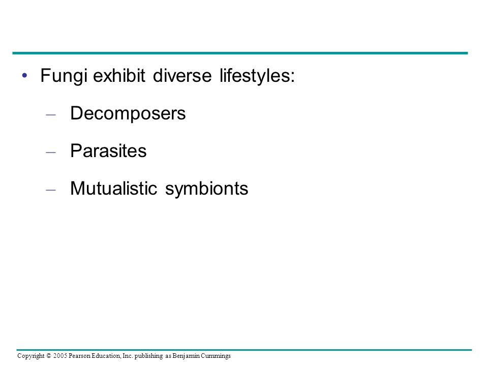 Fungi exhibit diverse lifestyles: