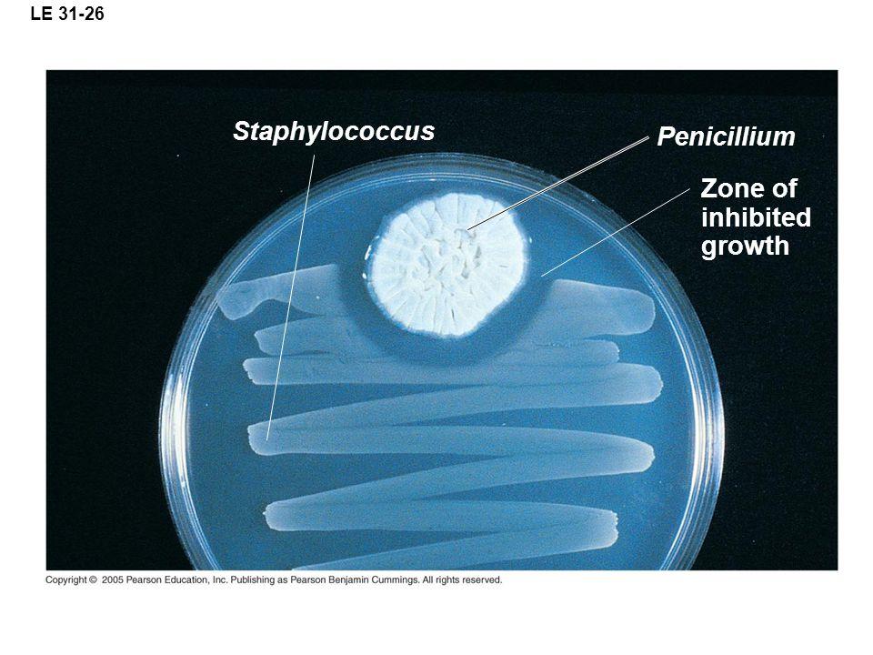 LE 31-26 Staphylococcus Penicillium Zone of inhibited growth
