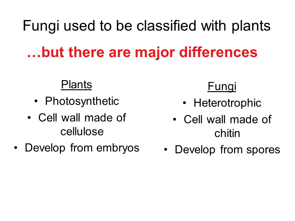 Fungi used to be classified with plants