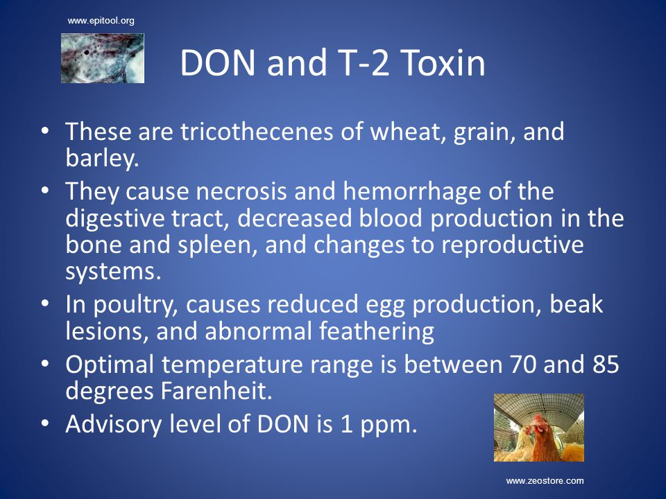 DON and T-2 Toxin These are tricothecenes of wheat, grain, and barley.