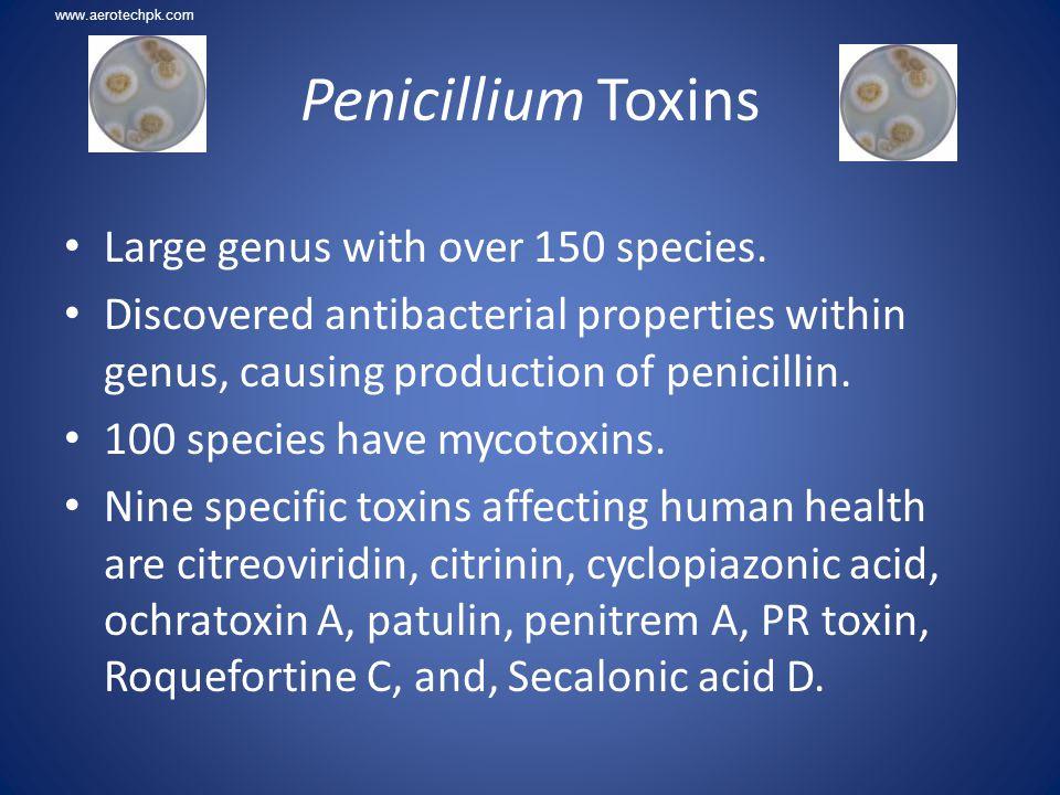 Penicillium Toxins Large genus with over 150 species.