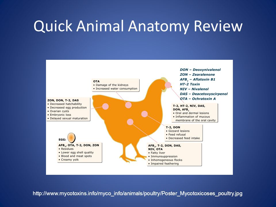 Quick Animal Anatomy Review