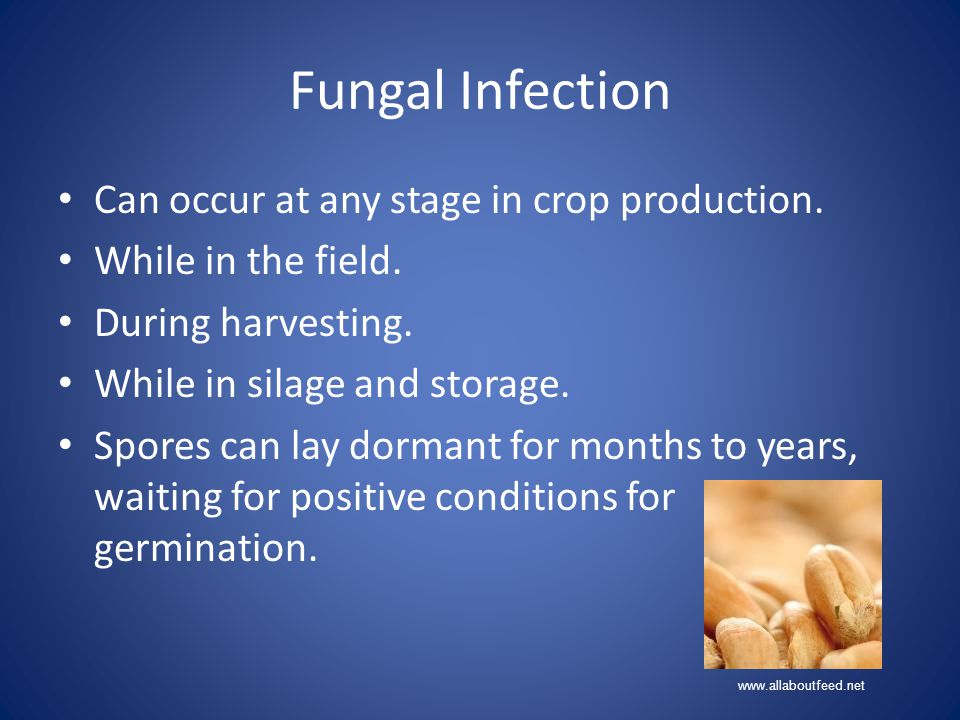 Fungal Infection Can occur at any stage in crop production.