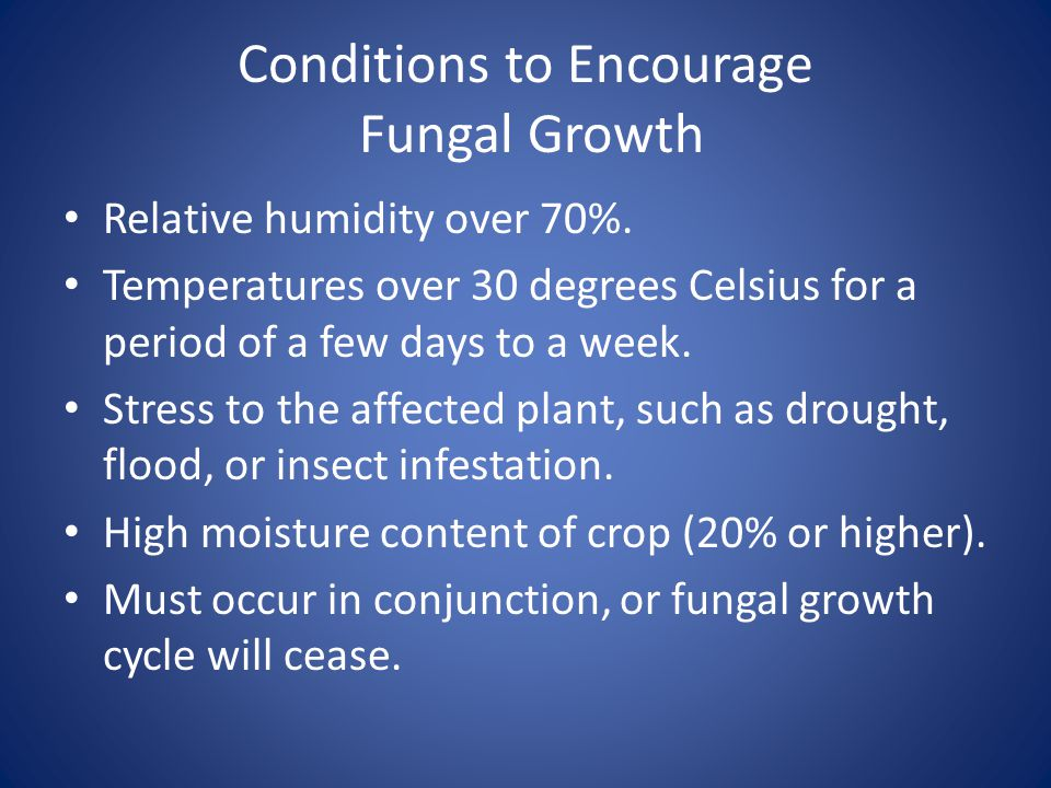 Conditions to Encourage Fungal Growth