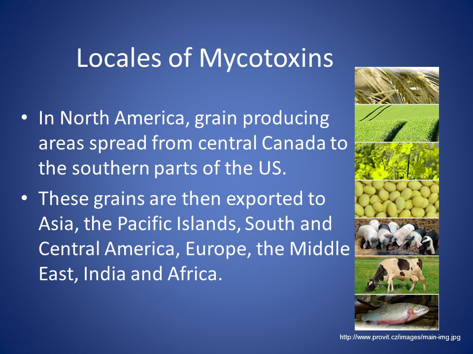 Locales of Mycotoxins In North America, grain producing areas spread from central Canada to the southern parts of the US.