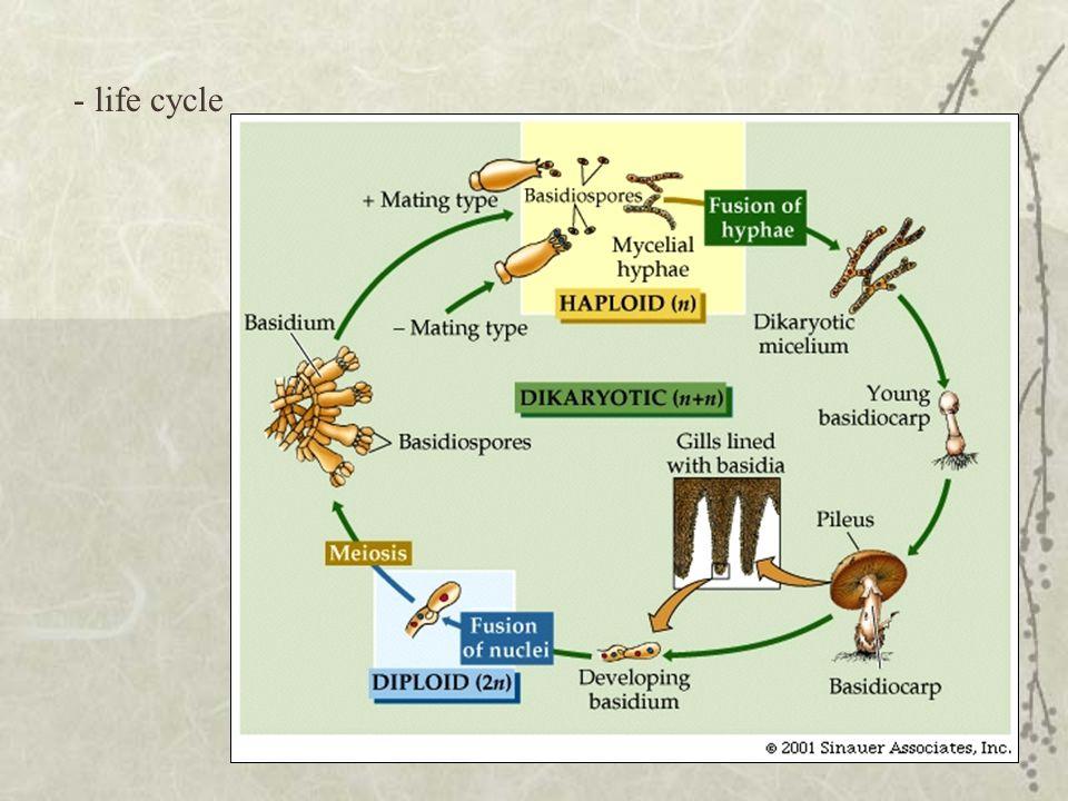 - life cycle