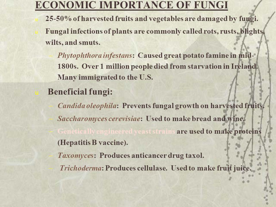 ECONOMIC IMPORTANCE OF FUNGI