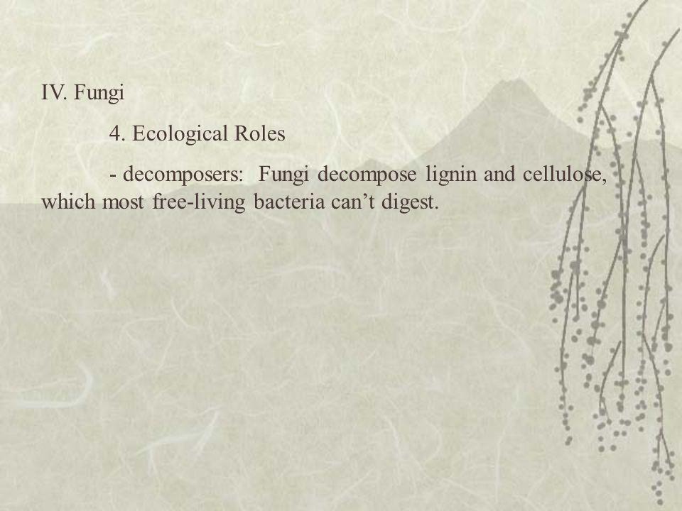 IV. Fungi 4. Ecological Roles.