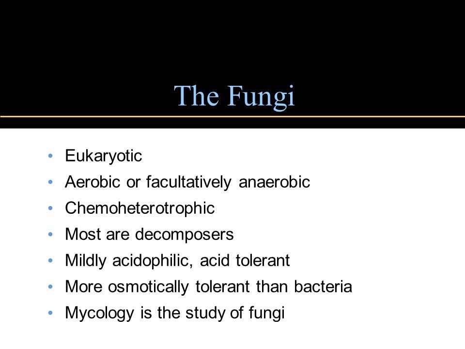 The Fungi Eukaryotic Aerobic or facultatively anaerobic