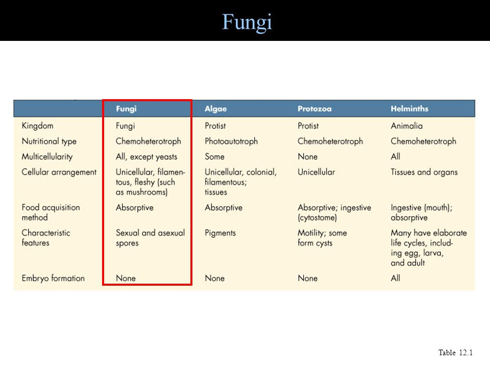 Fungi Table 12.1