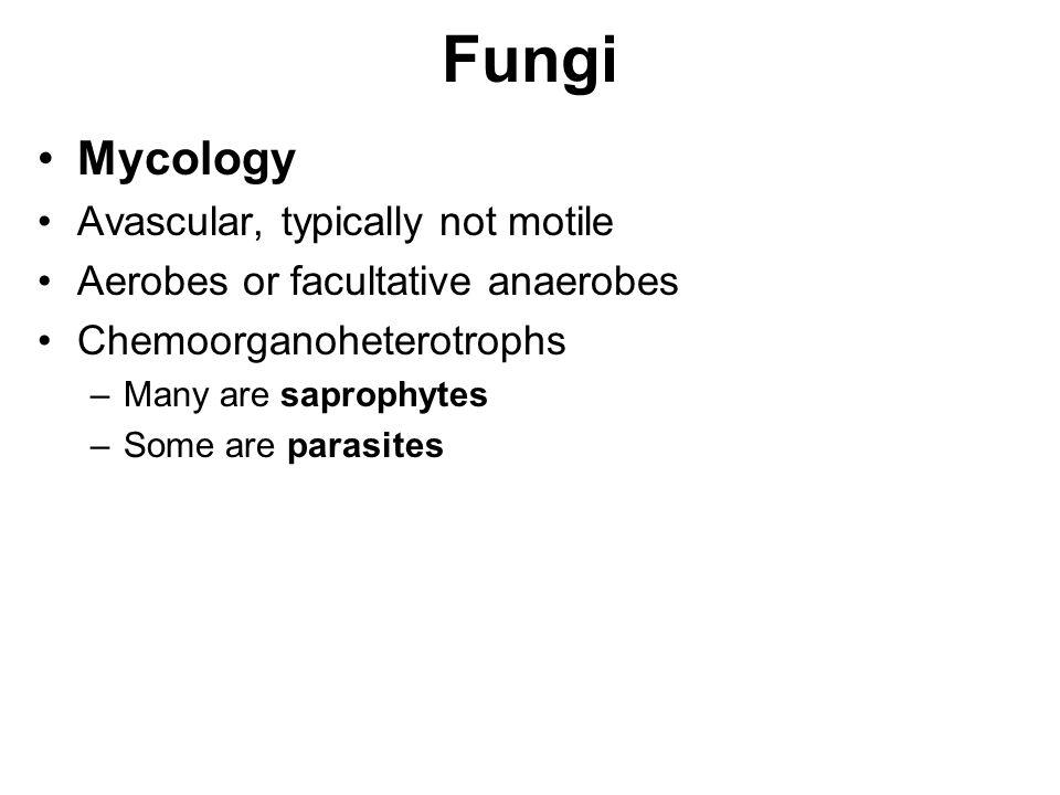 Fungi Mycology Avascular, typically not motile