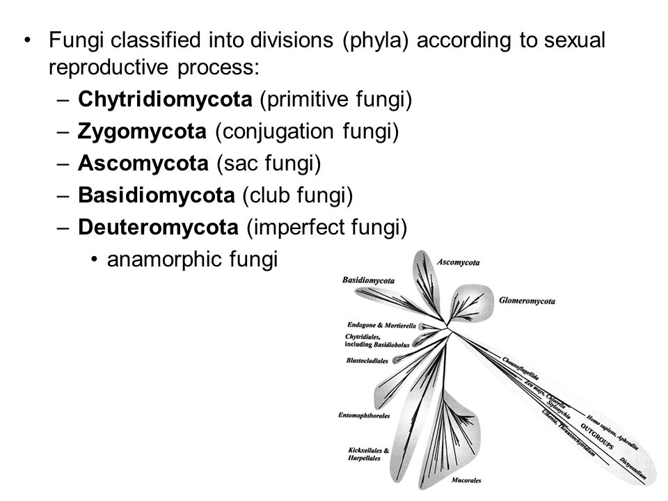 Fungi classified into divisions (phyla) according to sexual reproductive process: