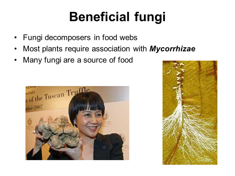 Beneficial fungi Fungi decomposers in food webs
