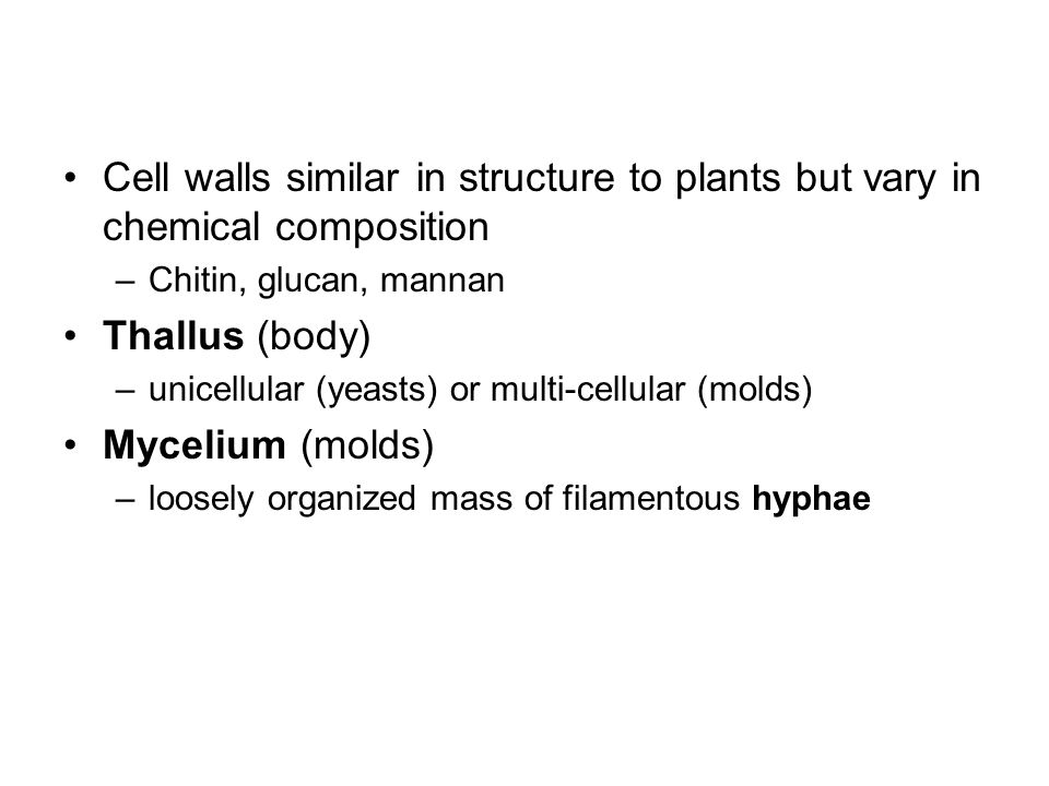 Cell walls similar in structure to plants but vary in chemical composition