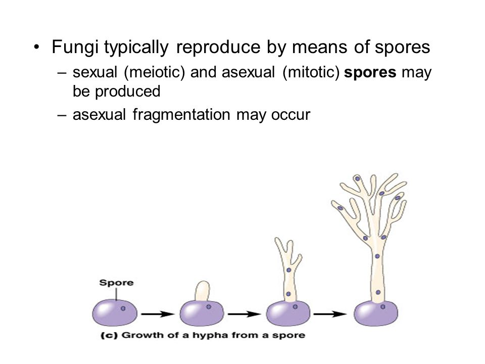Fungi typically reproduce by means of spores
