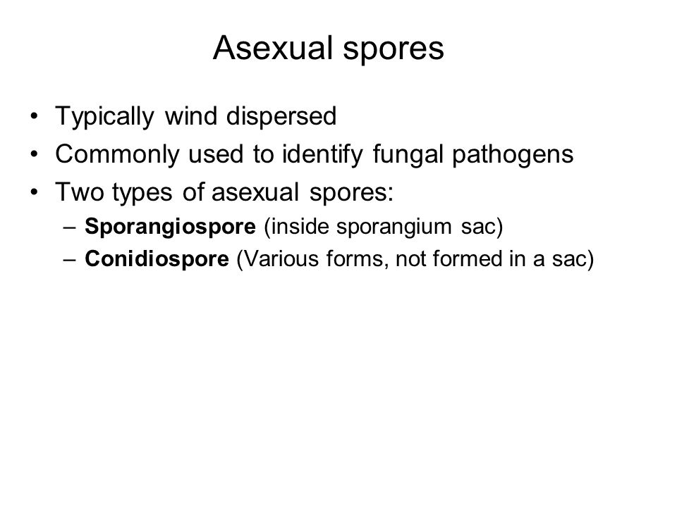 Asexual spores Typically wind dispersed