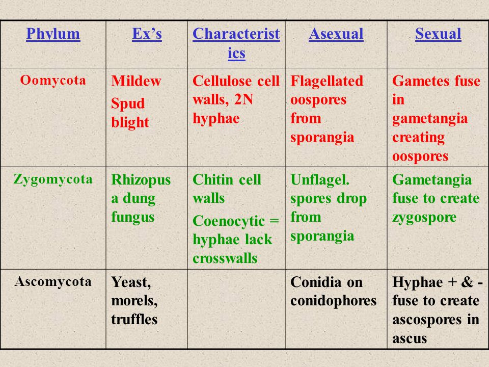 Phylum Ex's Characteristics Asexual Sexual