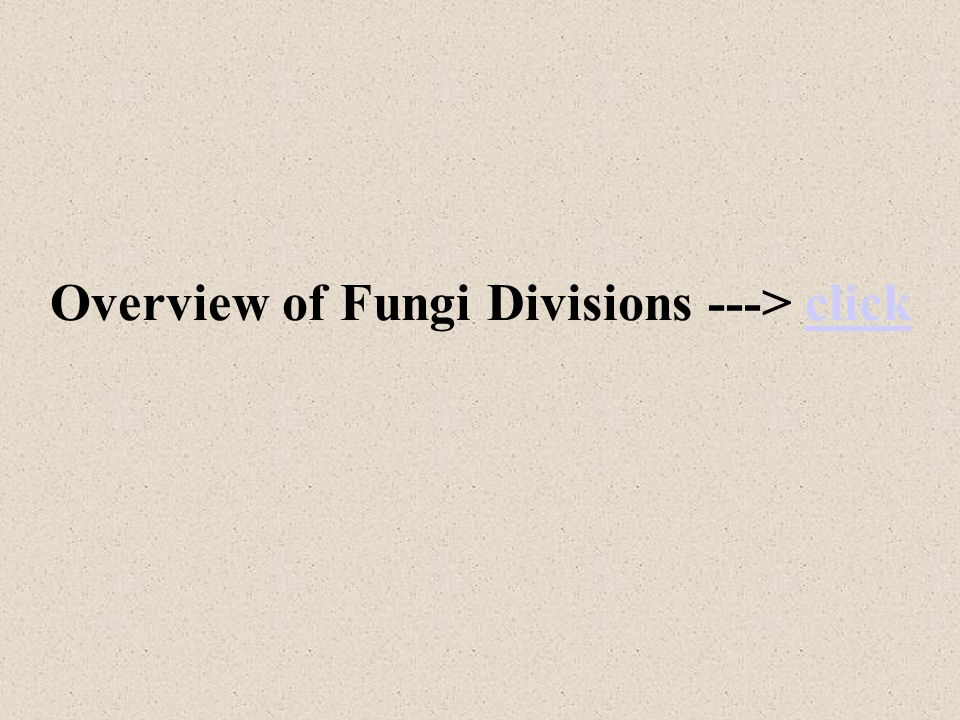Overview of Fungi Divisions ---> click