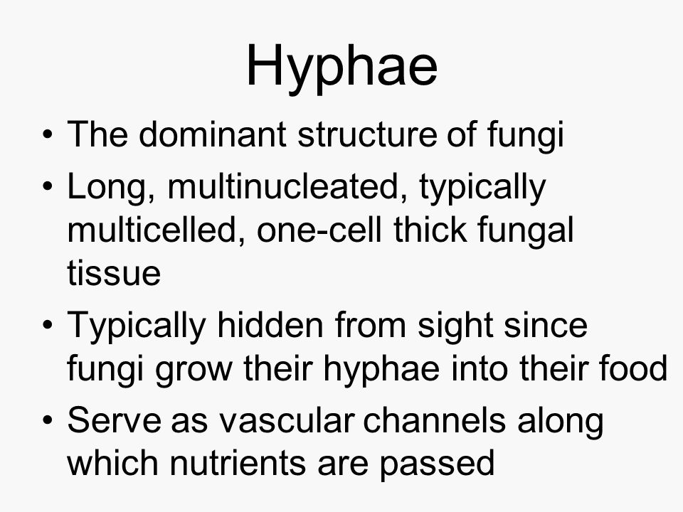 Hyphae The dominant structure of fungi