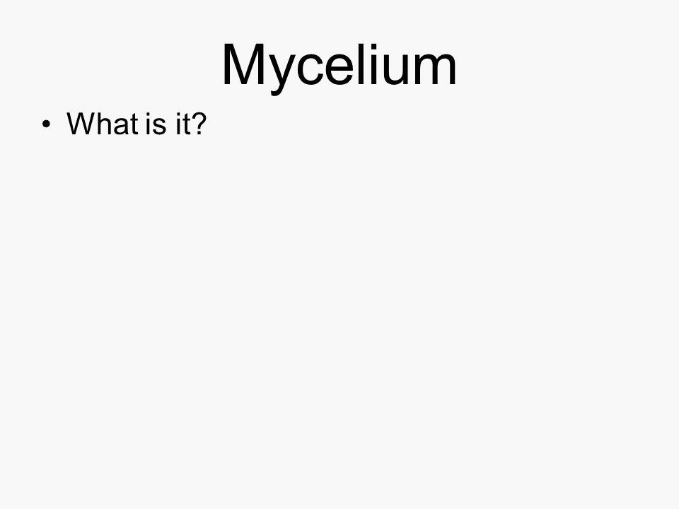 Mycelium What is it