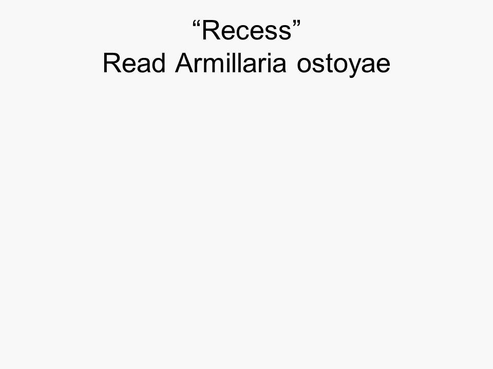 Recess Read Armillaria ostoyae