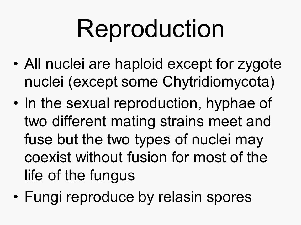 Reproduction All nuclei are haploid except for zygote nuclei (except some Chytridiomycota)