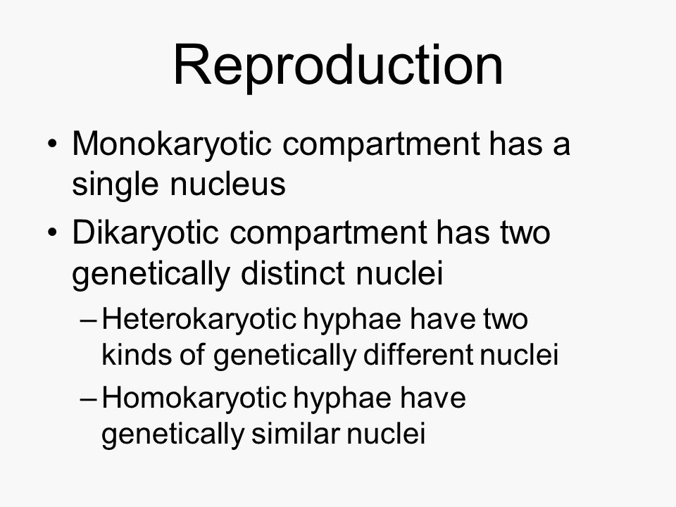Reproduction Monokaryotic compartment has a single nucleus