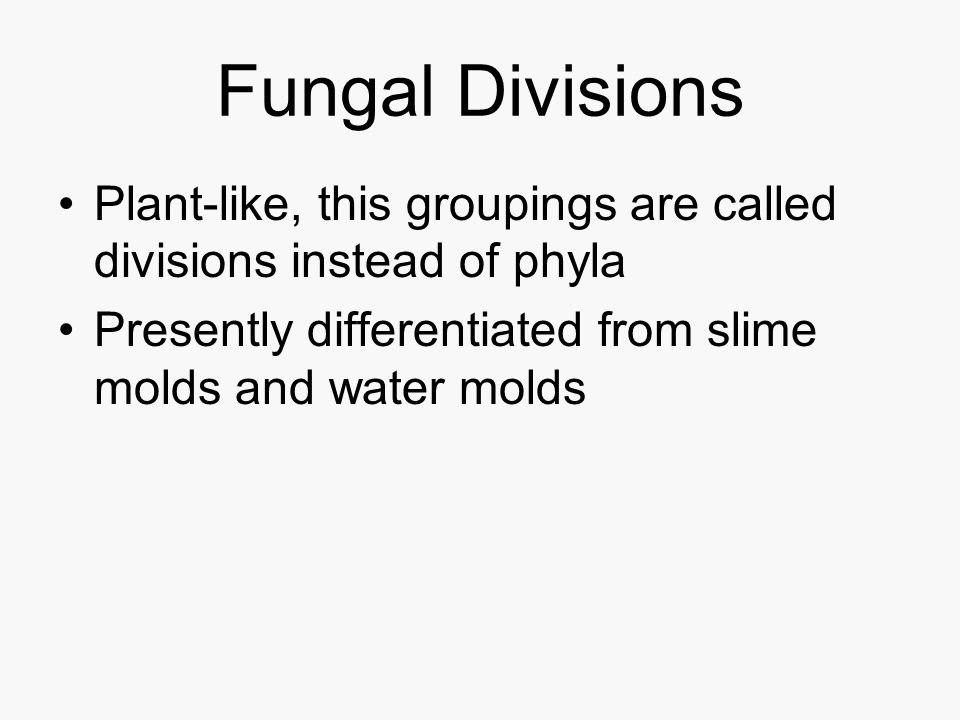 Fungal Divisions Plant-like, this groupings are called divisions instead of phyla.