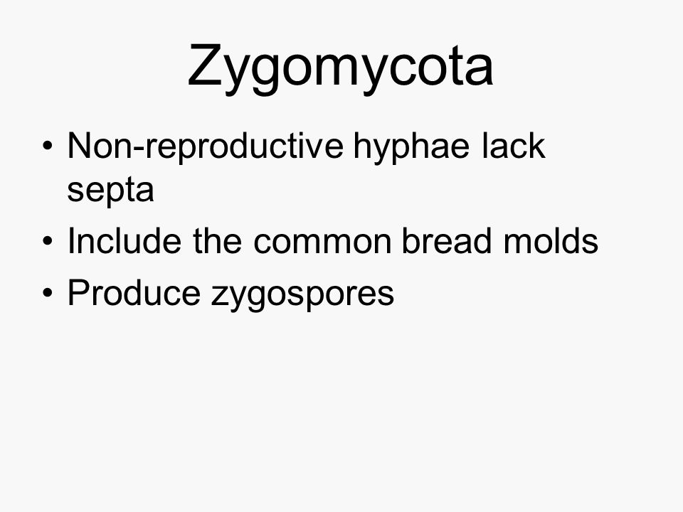 Zygomycota Non-reproductive hyphae lack septa
