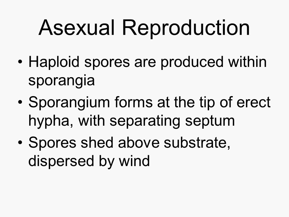 Asexual Reproduction Haploid spores are produced within sporangia